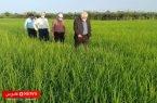 100 میلیارد تومان تسهیلات به کشاورزان تالش پداخت شد