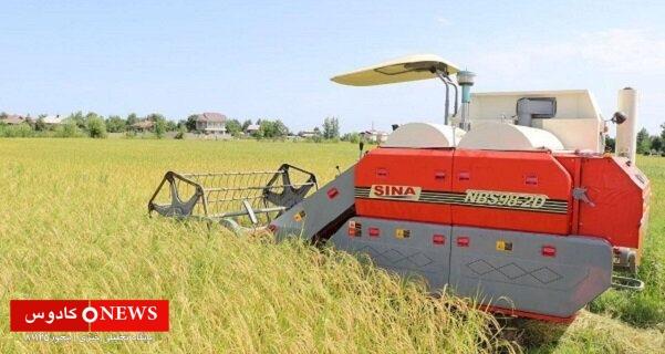 بیش از ۱۴۰ هزار هکتار از اراضی شالیزاری گیلان دچار خسارت شد