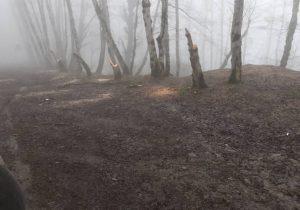 قاچاق چوب در گیلان ۳۰ درصد افزایش داشته است