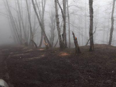 ماجرای قتل عام درختان ییلاق ماسال در شب گذشته چیست!؟